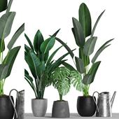 Plants 125