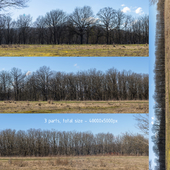 Panorama with trees without leaves