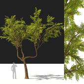 tree542