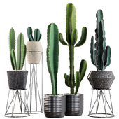 Plants collection 03. Cactus set