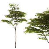 Tree 45A