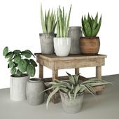 Plants 132