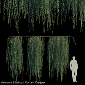 Vernonia Elliptica | Curtain Creeper V2