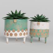 fantasy indoor plants