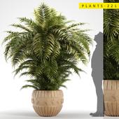 PLANTS 221