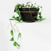 hanging ivy on corner version1
