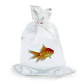 fish in the package