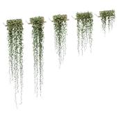 Растения на полках. 5 моделей
