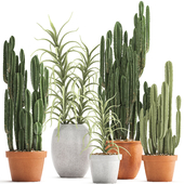 Plant collection 302. Cactus set.