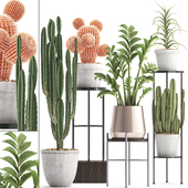 Plant collection 303. Cactus set.