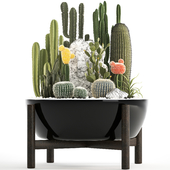 Plant collection 305. Cactus set.