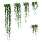 Свисающие растения на полках. 5 моделей