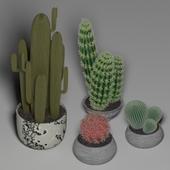 Cactus Set 1