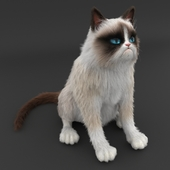 Grumpy cat contest