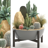 Plant collection 306. Cactus set.