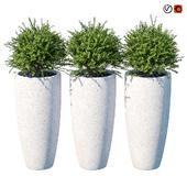 Street bushes in pots V