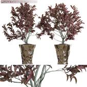 Prunus Cerasifera in pots