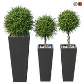 Растения в кашпо Quadro Bo