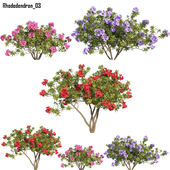 Rhododendron 03