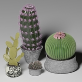 Cactus set 2