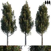 Common garden tree # 1