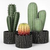 Set of cacti in wooden pots