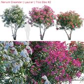 Nerium Oleander | Laurier | Trúc Đào # 2