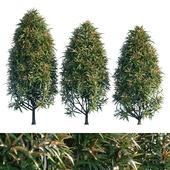 Common garden tree # 2