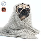Pug 1 - Winter is coming