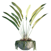 Plant in pots # 9: Tropical Inspiron