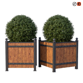 Street bushes in boxes