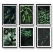 Tropical leaves   set 26