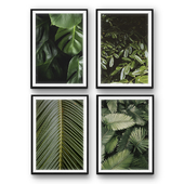 Tropical leaves   set 27