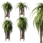 Fern in pots. 4 models