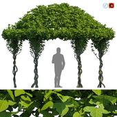 Gazebo Greenery / Зеленая Беседка
