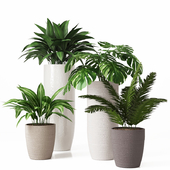 Collection of indoor plants 01