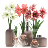Bouquet of flowers 89. Hippeastrum.