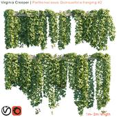 Virginia Creeper   Parthenocissus Quinquefolia hanging #2   10 module