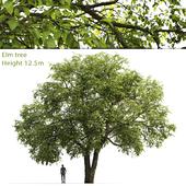 Вяз | Elm-tree #1 (12.5m)