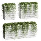 Ivy in tubs. 3 models