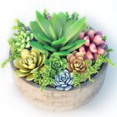 Jc Succulent Plant 1