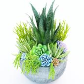 Jc Succulent Plant 2