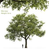 Вяз | Elm-tree #2 (16m)