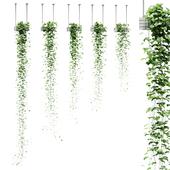 Viun in hanging pots. 5 models