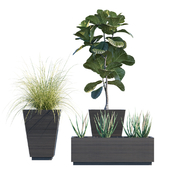 Plant in pots # 22: Hallway