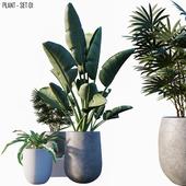 Plant set # 01