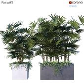 Plant set # 3