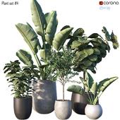 Plant set #4