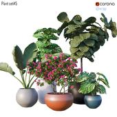 Plant set # 5
