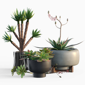 Plants collection 11